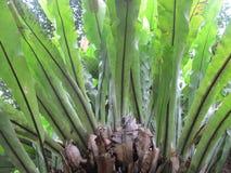 Helecho verde, planta tropical asiática, fotografía de la naturaleza fotos de archivo libres de regalías