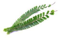 Helecho verde salvaje Fotografía de archivo