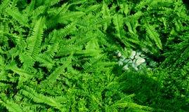 Helecho y piedra verdes Imágenes de archivo libres de regalías