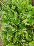 Helecho y verdura Foto de archivo libre de regalías