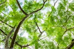 Helechos de árbol de debajo foto de archivo libre de regalías