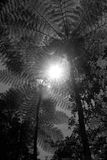 Helechos de árbol en China Foto de archivo libre de regalías