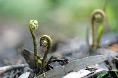 Helechos de árbol jovenes Fotos de archivo