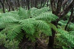 Helechos de árbol que crecen en selva tropical Foto de archivo libre de regalías