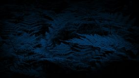 Helechos del arbolado en brisa apacible en la noche metrajes