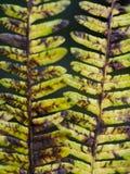 Helechos del arbolado en colores de la caída del otoño Imágenes de archivo libres de regalías