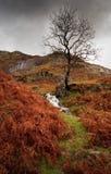 Helechos del otoño en el districto del lago imagen de archivo libre de regalías
