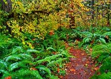 Helechos en Autumn Trail Foto de archivo libre de regalías