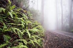 Helechos en el bosque Fotografía de archivo libre de regalías