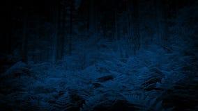 Helechos en el bosque en la noche almacen de video
