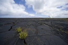 Helechos en grieta del campo de lava Imagen de archivo libre de regalías