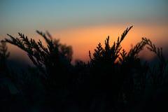 Helechos en la puesta del sol Fotografía de archivo libre de regalías