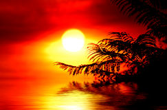 Helechos en la salida del sol Fotografía de archivo libre de regalías