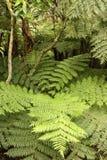 Helechos en selva tropical tropical Fotografía de archivo libre de regalías