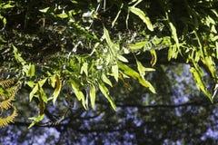 Helechos hermosos en el bosque y la sol Australia agradable Imagen de archivo libre de regalías