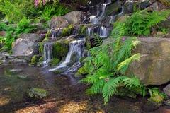 Helechos por la cascada en Crystal Springs Rhododendron Garden fotografía de archivo