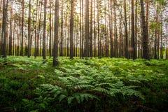 Helechos que crecen en bosque fotos de archivo