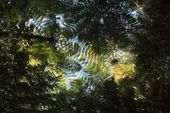 Helechos que crecen en selva tropical Foto de archivo libre de regalías
