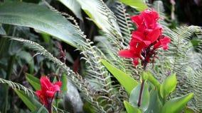 Helechos rojos y hojas del verde de la flor que se sacuden en brisa almacen de metraje de vídeo