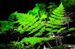 Helechos verdes en el bosque fotografía de archivo