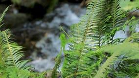 Helechos verdes en una selva tropical almacen de video
