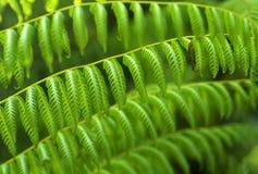 Helechos verdes tropicales. Imagen de archivo