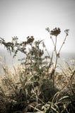 Helechos y flores del mar Foto de archivo libre de regalías