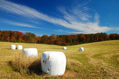 Helen's Farm At Fall Season. Helen's farm during fall season is very attractive and beautiful Royalty Free Stock Image