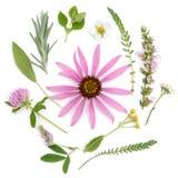 Helende Kruiden Geneeskrachtige installaties en bloemenboeket van echinacea, klaver, duizendblad, hyssop, salie, luzerne, lavende stock afbeeldingen