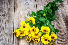 Helenium Flowers on Wooden Rustik Background Stock Image