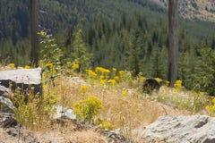 helens pomnikowej lasów góry odradzania st krajowego obraz royalty free