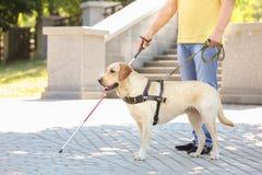 Helfender Blinder des Blindenhunds Stockfoto