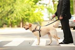 Helfender Blinder des Blindenhunds Stockfotos
