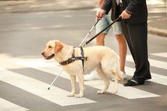 Helfender Blinder des jungen Mannes mit Blindenhund Stockfoto