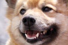 Helft-ras hond Stock Foto's