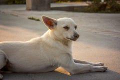 Helft-ras hond in een ogenblik van rust Stock Foto's