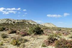 Helft-woestijn landschap royalty-vrije stock afbeelding