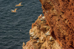 Helgoland - German island in the North sea Stock Images