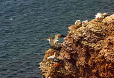Helgoland - German island in the North sea Royalty Free Stock Photos