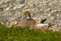 Helgoland - German island in the North sea Royalty Free Stock Photography