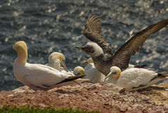 Helgoland - German island in the North sea Stock Photography