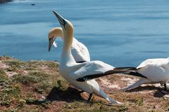 Helgoland Stock Photography