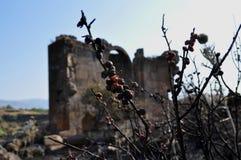 HelgonGevorg kyrka och avfyrad blomma Royaltyfri Bild