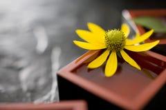 Helianthus tuberosus Royalty Free Stock Photo