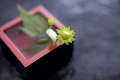 Helianthus tuberosus Royalty Free Stock Image