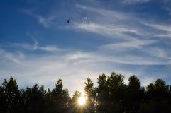 Helicóptero sobre bosque Imágenes de archivo libres de regalías