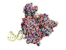 Helicase do ADN ilustração stock