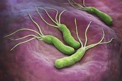 Helicobacter odźwierników bakterie royalty ilustracja