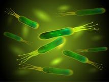 Helicobacter pylori bacteria. Vector. royalty free illustration
