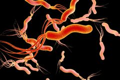 Helicobacter pylori, bacterium which causes gastric and duodenal ulcer Royalty Free Stock Photos